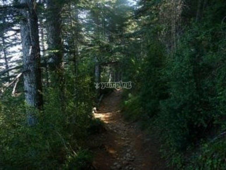 Trails on mountain bike through the Pyrenees