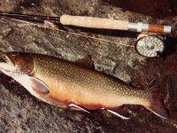 Pez y cana de pescar