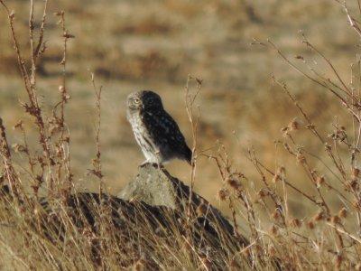 Actividades Barbancho Ornitología