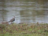 El pájaro cerca del agua