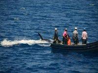 观看海豚表演庆祝你的钓鱼活动