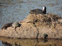 Pajatos and turtles