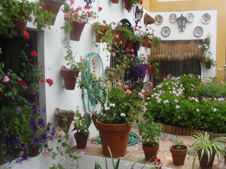Visitando patios en el Festival de Córdoba