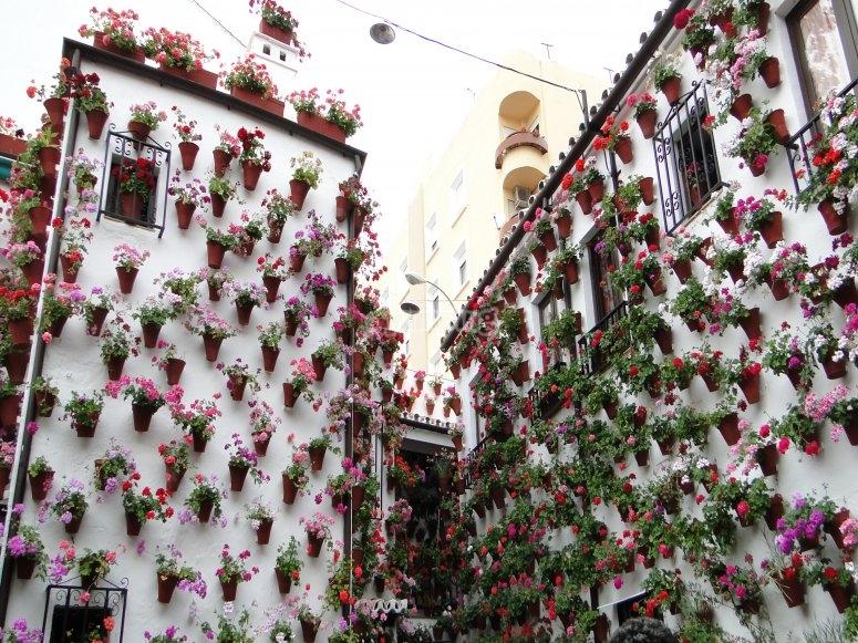 Disfrutando del Festival de Patios de Córdoba