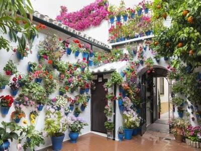Ruta guiada al Festival de los Patios de Córdoba