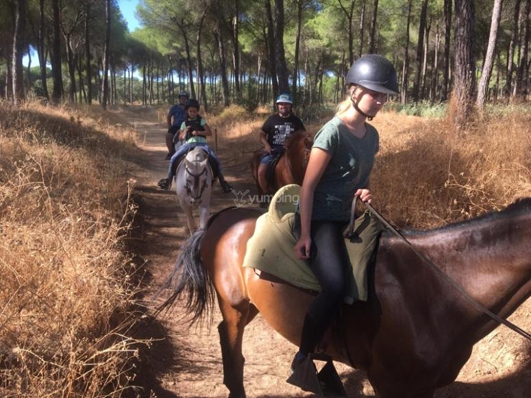 Paseando por bosques a caballo