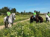 Horseback riding through fields of daisies