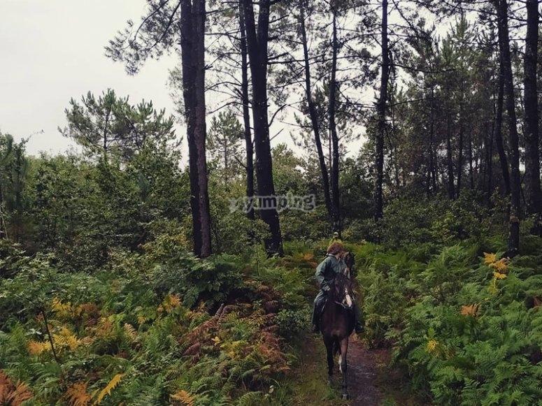 Paseando por arboledas en caballo