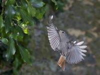 Taller de fotografia de aves