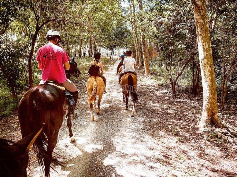 Paseo a caballo por los bosques de Pla de l'Estany