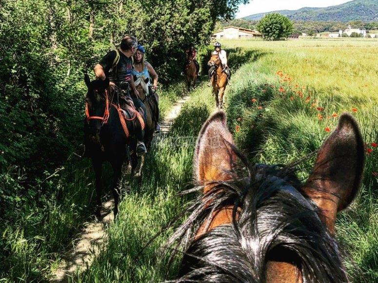 Ruta a caballo por prados de Pla de l´Estany