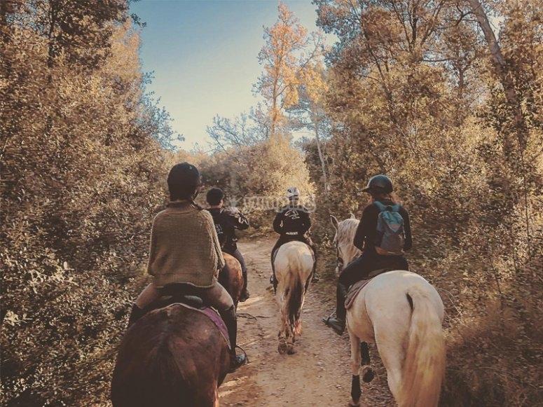 Ruta a caballo por bosques de Pla de l´Estany