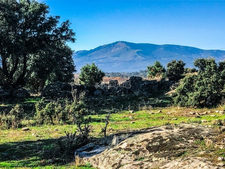 Landscapes of the Dehesa Boyal