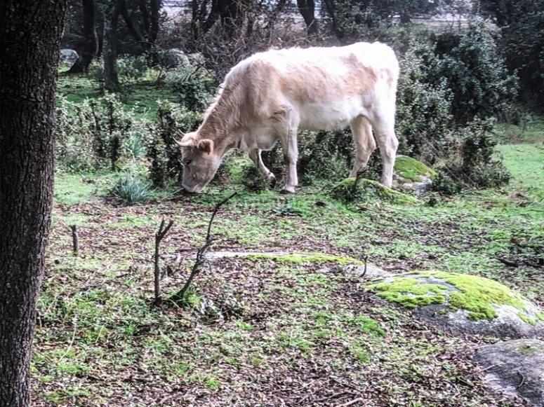 Knowing the fauna of the Dehesa Boyal