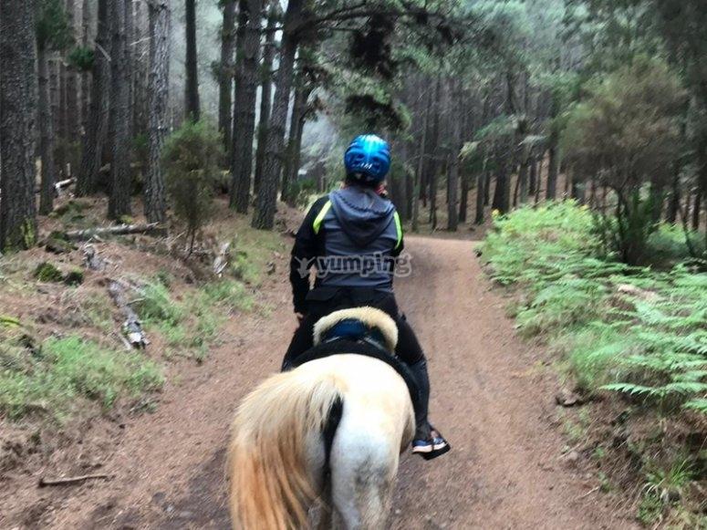 Day on horseback
