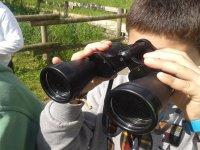 observando a las aves