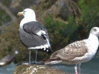 ven a descubrir las aves de ondarroa