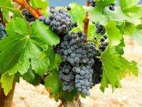 Los mejores viñedos