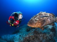 Diving in the Tabarca Marine Reserve