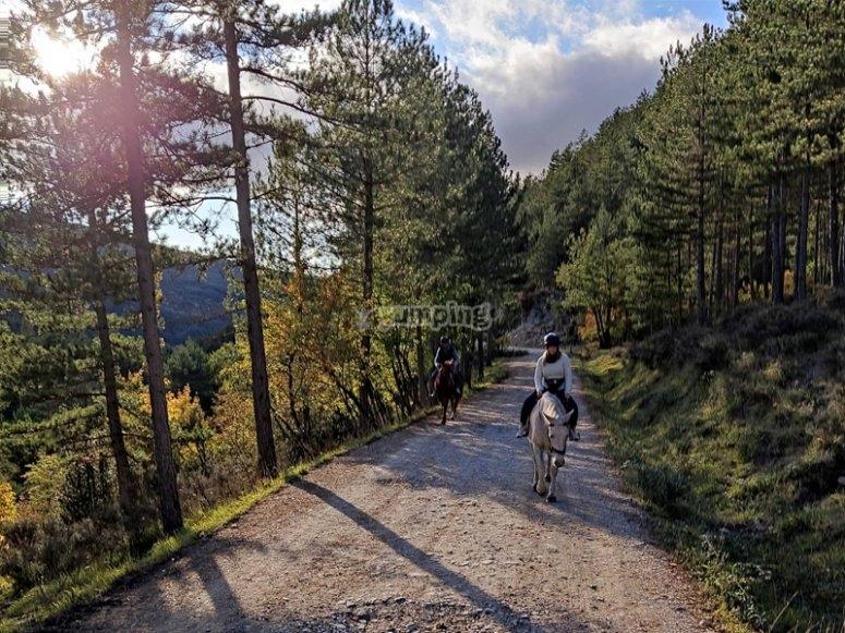 穿越森林的骑马