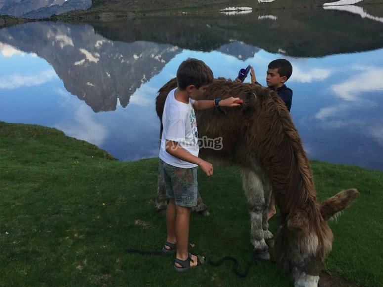 Donkey ride through the Pyrenees