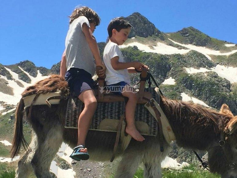 穿越比利牛斯山脉的山谷的驴