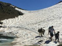 Snowy donkey ride