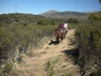 Cabalgando橡树路线维尔达两匹马