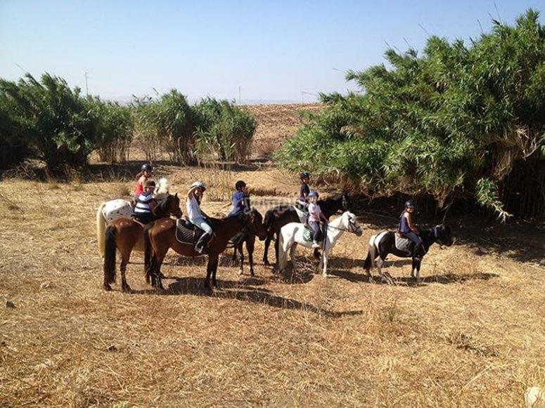 骑马游览练习骑马