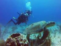 龟洞穴潜水员潜水