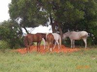 Closed horses