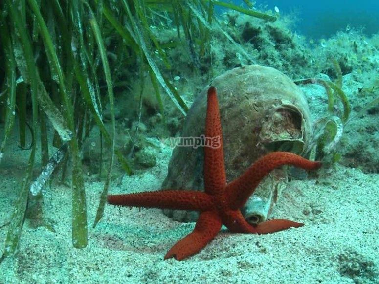 锡切斯潜水