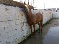nuestor caballo