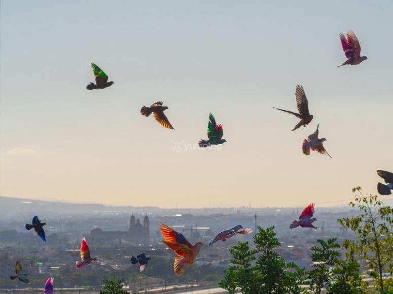 Aves de nuestro zoo