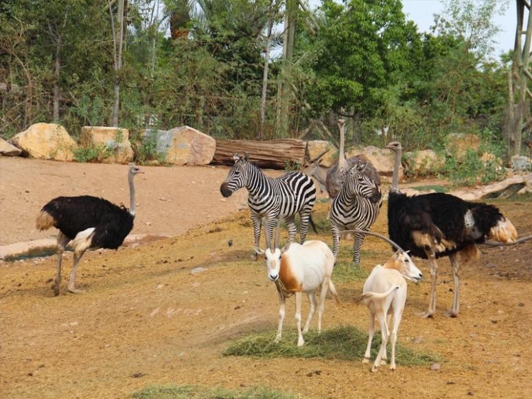 Aprendiendo en el zoo