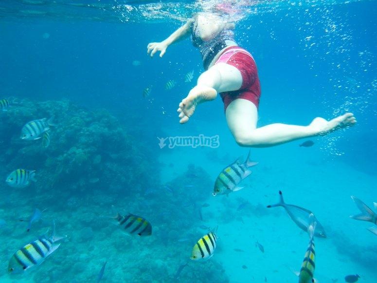 在鱼群中游泳