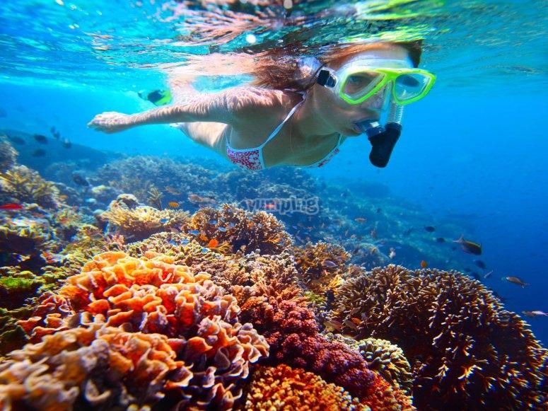 在塔巴卡岛海洋保护区浮潜