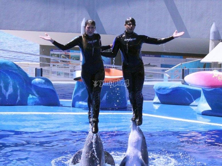 Jouer avec les dauphins