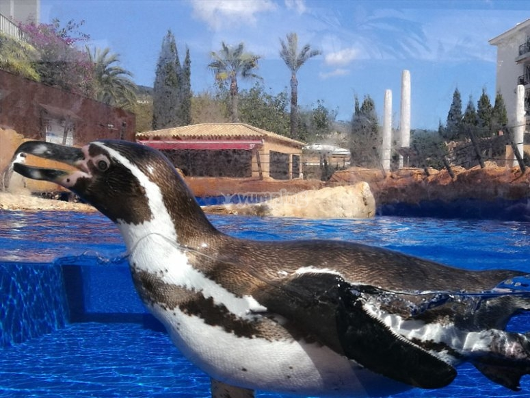 Journée à l'aquarium avec les pingouins