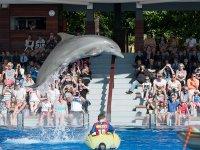 Spectacle avec les dauphins pour les enfants