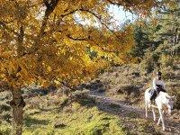 Horseback riding through forest