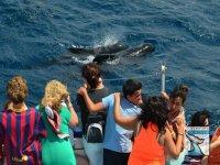 鲸与我们一起庆祝您的活动