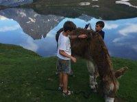 驴穿越韦斯卡比利牛斯山脉