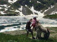 驴在比利牛斯山脉的湖边骑车