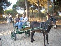 Giro in carrozza trainata da cavalli