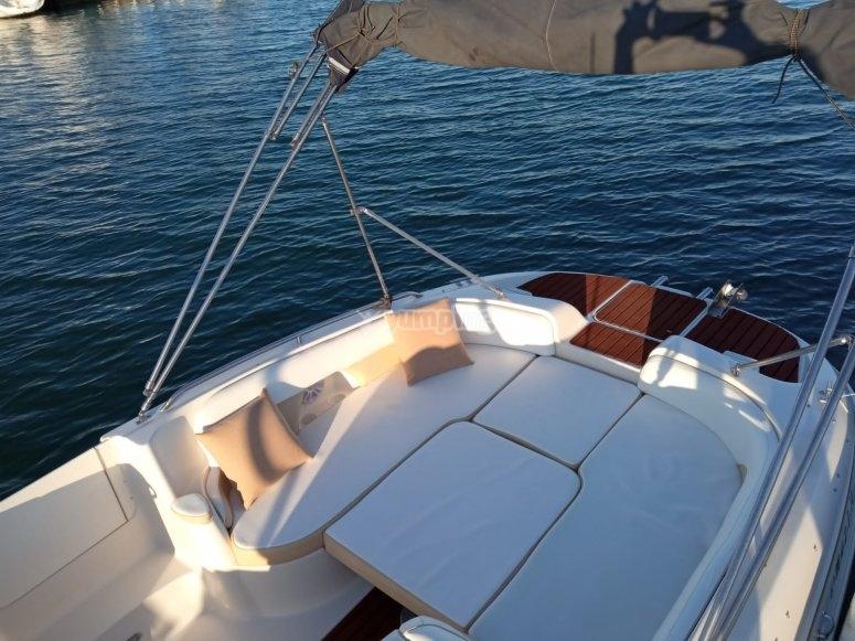 Salida en barco para ver delfines