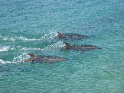 Gita in barca per vedere i delfini Fuengirola 4h