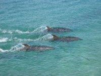 Paseo en barco para avistar delfines Fuengirola 4h