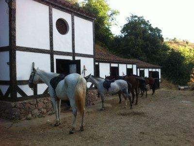 Escuela de Equitación Barquera Alta
