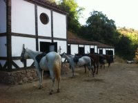 Horses next to the stables